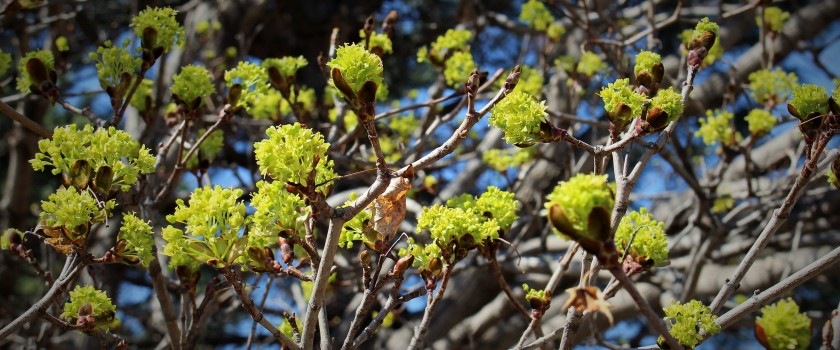 Railside Green in Spring