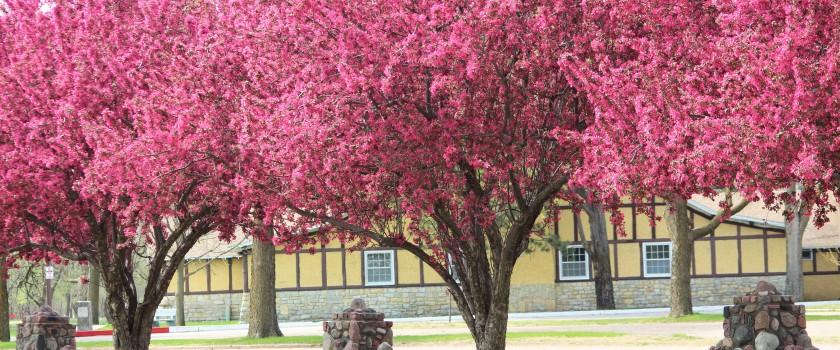 Oak Ballroom Spring